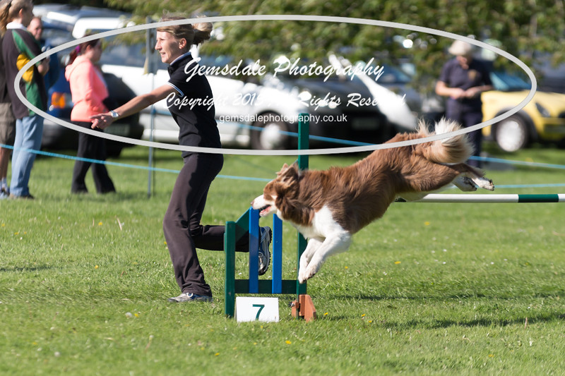 KC Southdowns Agility September 2015 -8028