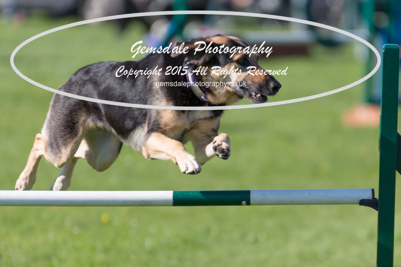 KC Southdowns Agility September 2015 -8023
