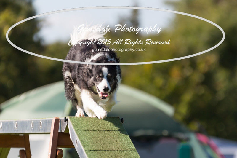 KC Southdowns Agility September 2015 -8008