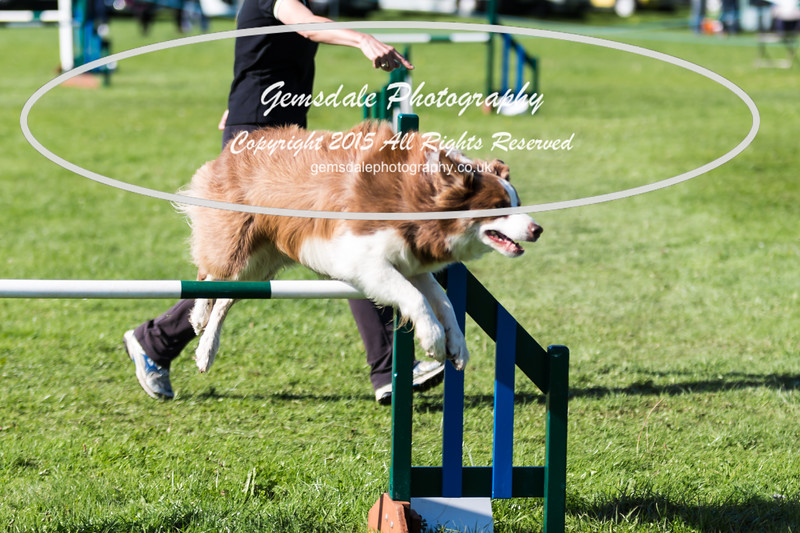 KC Southdowns Agility September 2015 -8027