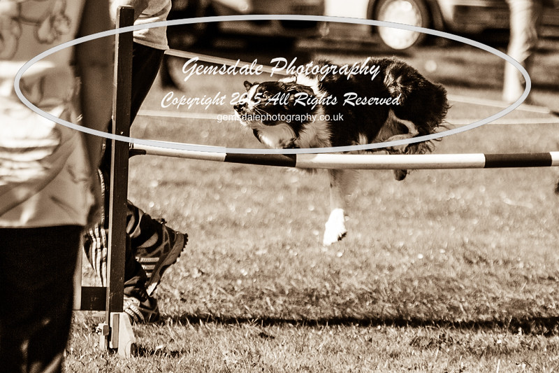 KC Southdowns Agility September 2015 -8026