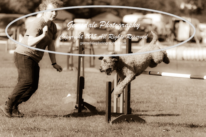 KC Southdowns Agility September 2015 -8033
