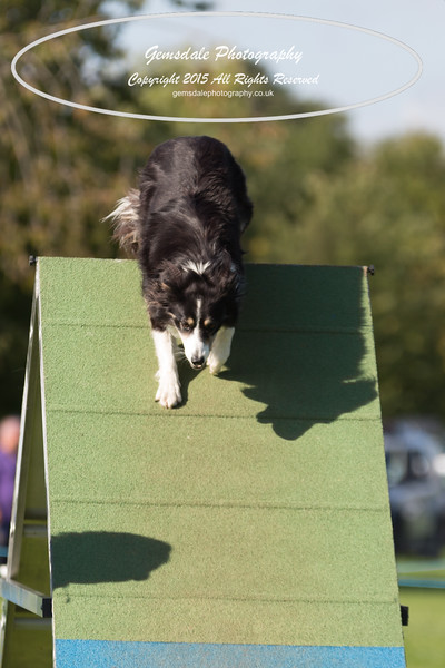 KC Southdowns Agility September 2015 -8018