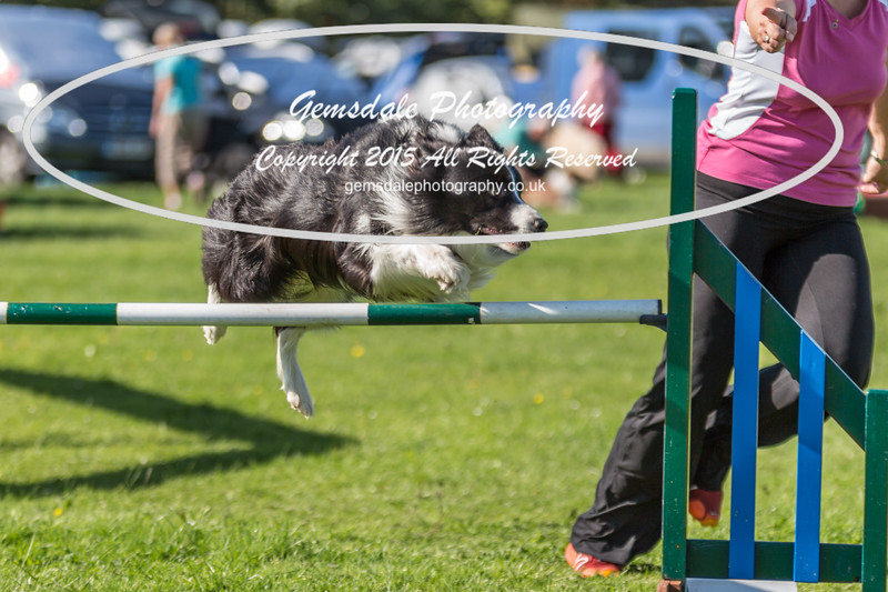 KC Southdowns Agility September 2015 -8002