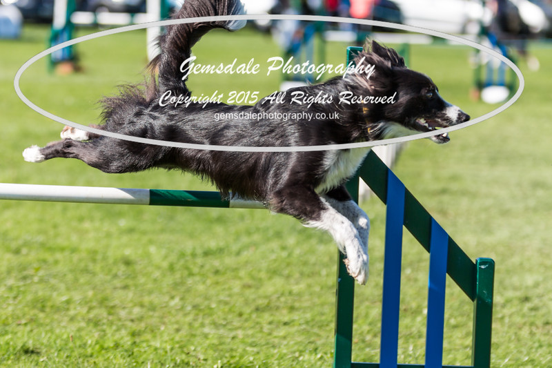 KC Southdowns Agility September 2015 -8013