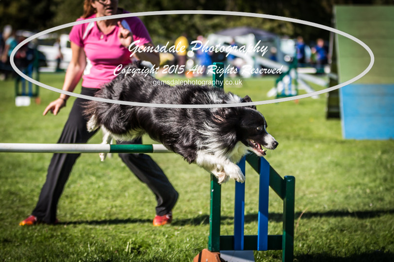 KC Southdowns Agility September 2015 -8003
