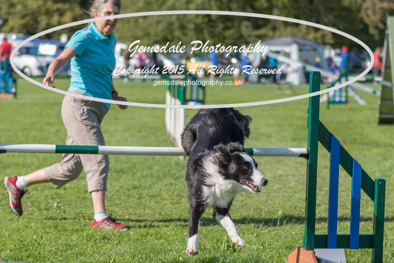 KC Southdowns Agility September 2015 -8046