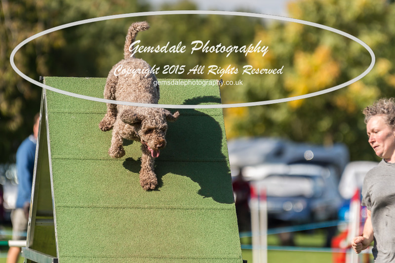 KC Southdowns Agility September 2015 -8032