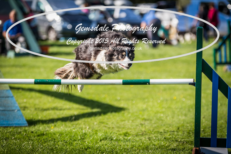 KC Southdowns Agility September 2015 -8016