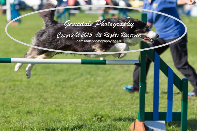 KC Southdowns Agility September 2015 -8017