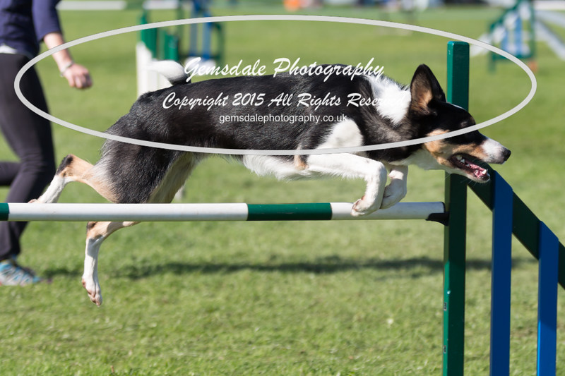 KC Southdowns Agility September 2015 -8040