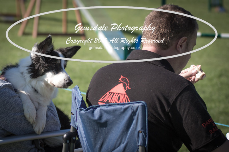 KC Southdowns Agility September 2015 -8021