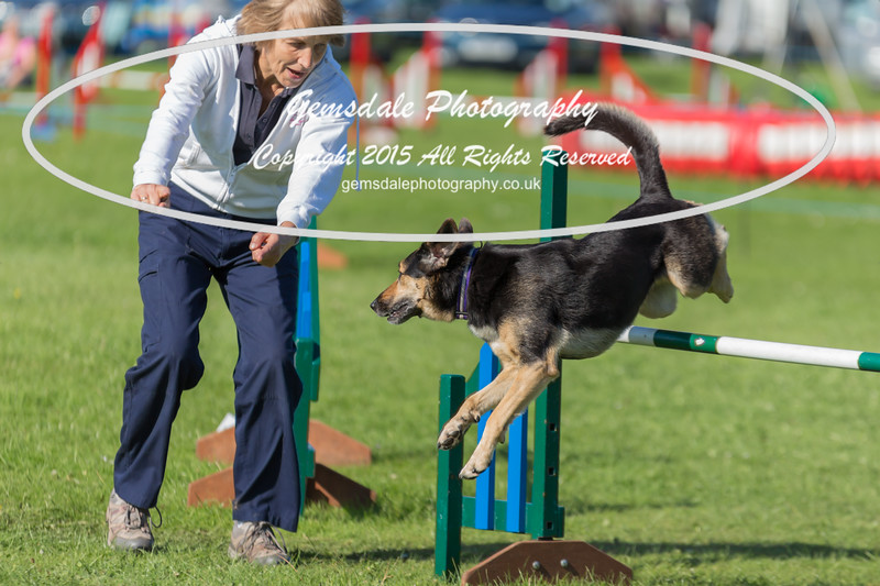 KC Southdowns Agility September 2015 -8024