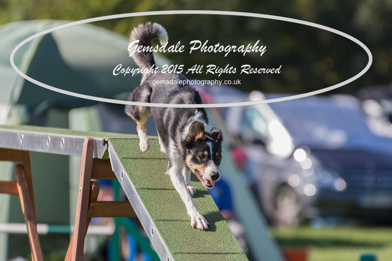 KC Southdowns Agility September 2015 -8038