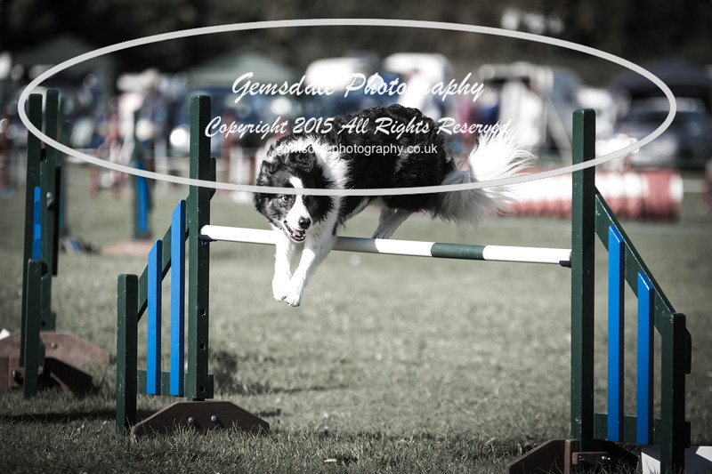 KC Southdowns Agility September 2015 -8011