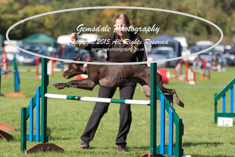 KC Southdowns Agility September 2015 -8037