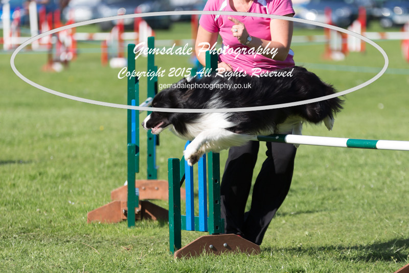 KC Southdowns Agility September 2015 -8005