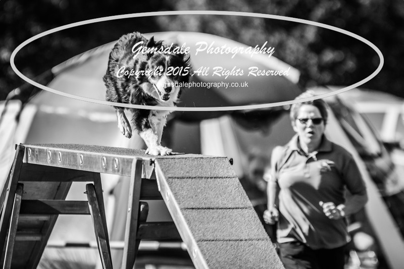 KC Southdowns Agility September 2015 -8015
