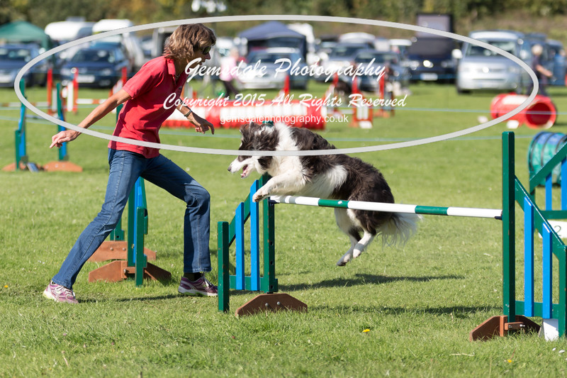 KC Southdowns Agility September 2015 -8045