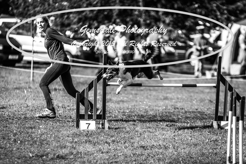 KC Southdowns Agility September 2015 -8044-2