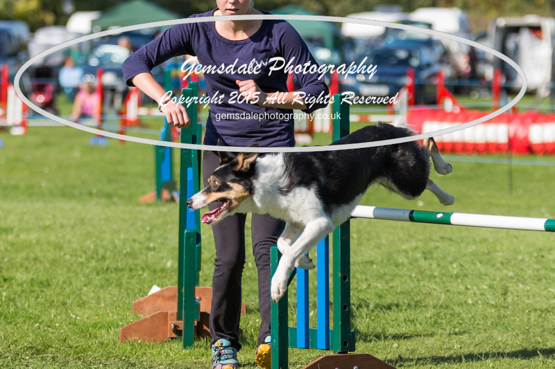 KC Southdowns Agility September 2015 -8043