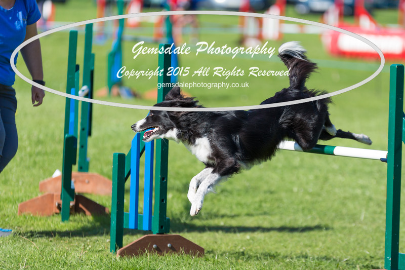 KC Southdowns Agility September 2015 -8014