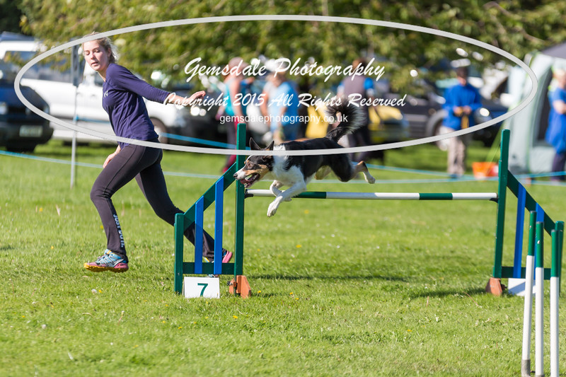 KC Southdowns Agility September 2015 -8044