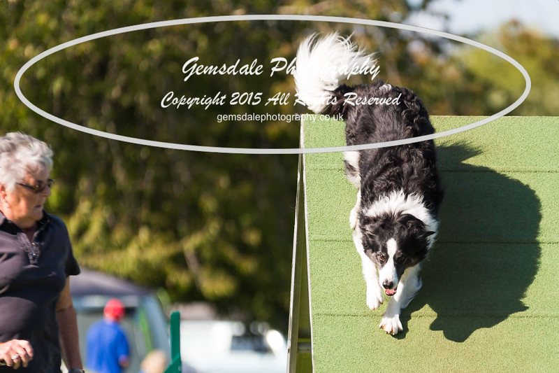 KC Southdowns Agility September 2015 -8010