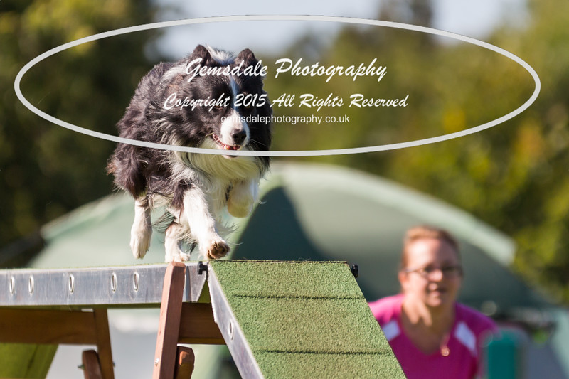 KC Southdowns Agility September 2015 -8000