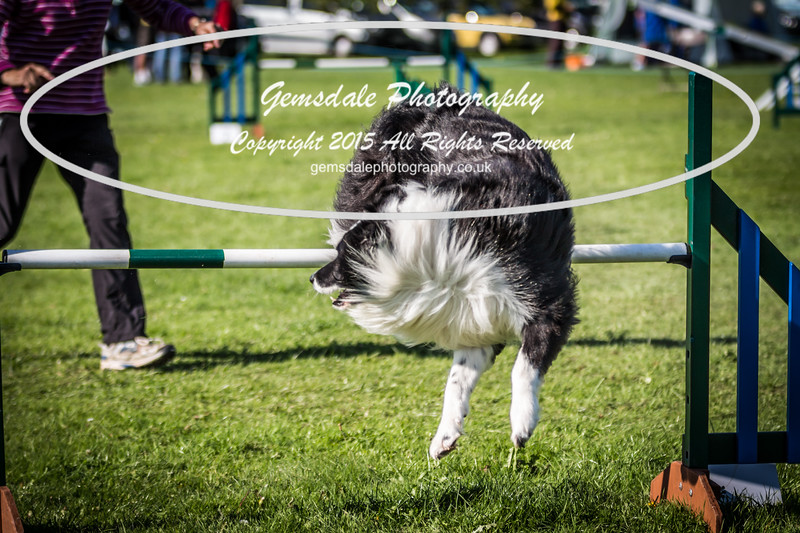 KC Southdowns Agility September 2015 -8006
