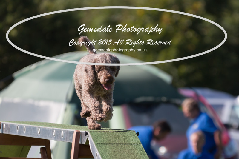 KC Southdowns Agility September 2015 -8030