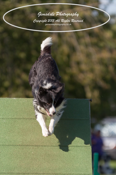 KC Southdowns Agility September 2015 -8004