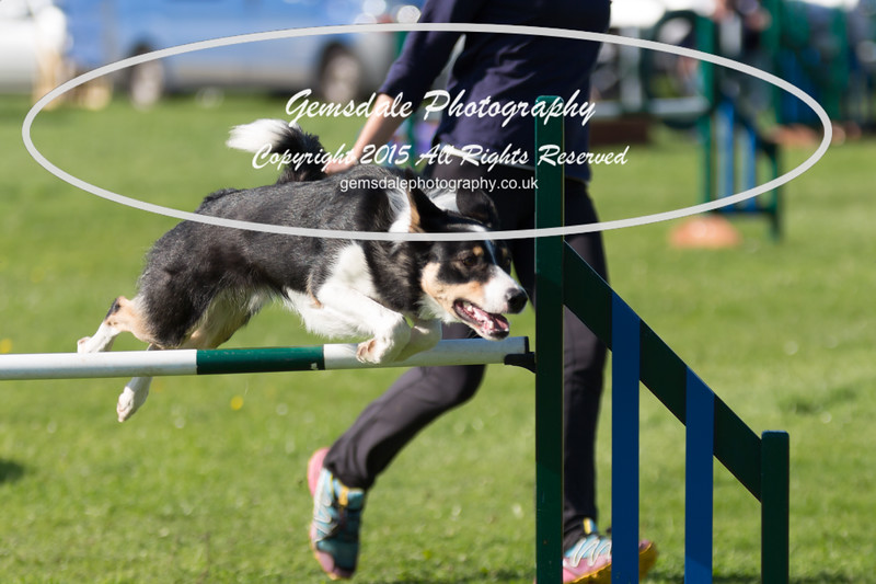 KC Southdowns Agility September 2015 -8039