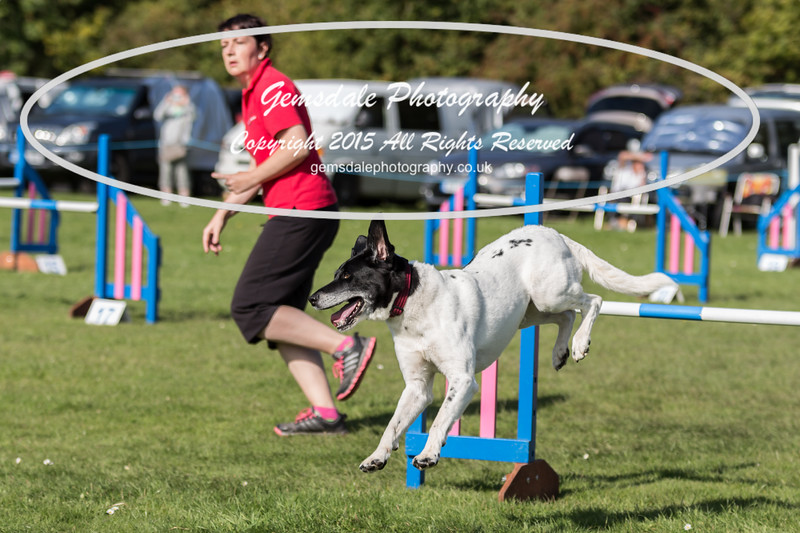 KC Southdowns Agility September 2015 -9047