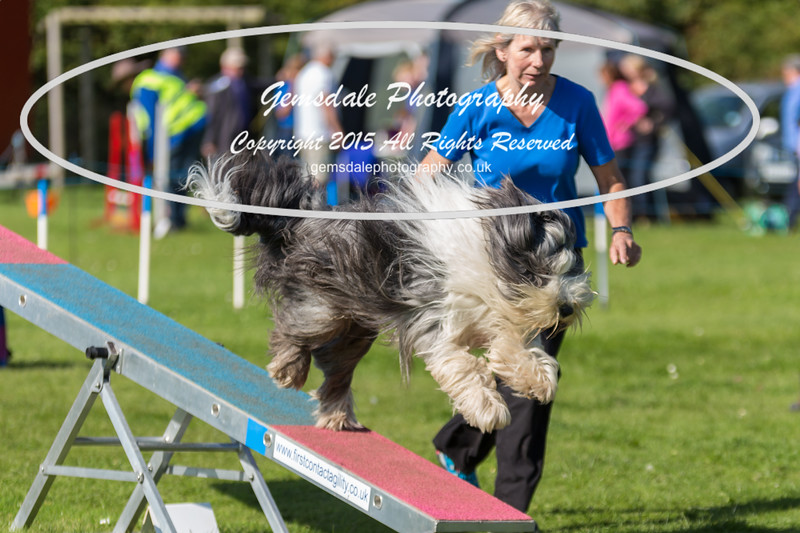 KC Southdowns Agility September 2015 -9019