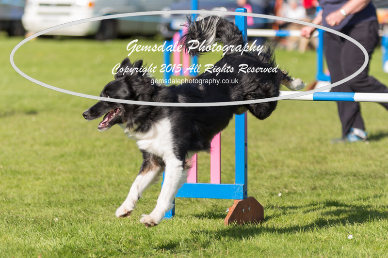 KC Southdowns Agility September 2015 -9022