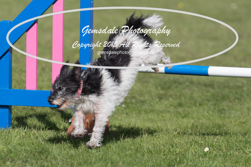 KC Southdowns Agility September 2015 -9009