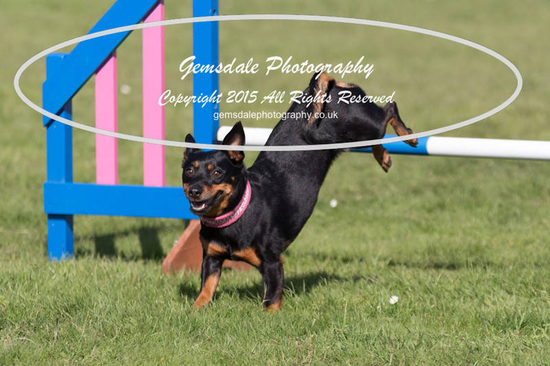 KC Southdowns Agility September 2015 -9004