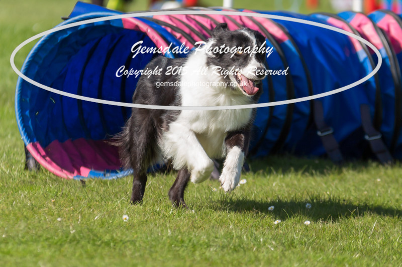 KC Southdowns Agility September 2015 -9036