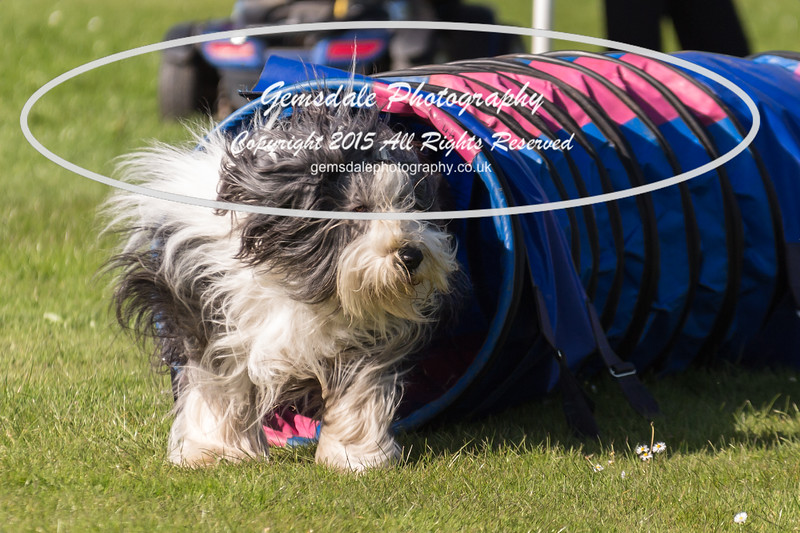 KC Southdowns Agility September 2015 -9018