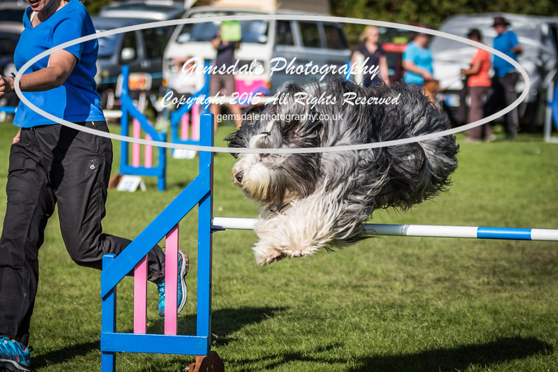 KC Southdowns Agility September 2015 -9017