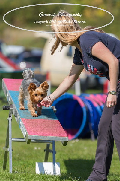 KC Southdowns Agility September 2015 -9002