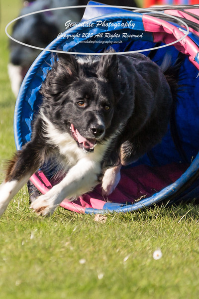 KC Southdowns Agility September 2015 -9023
