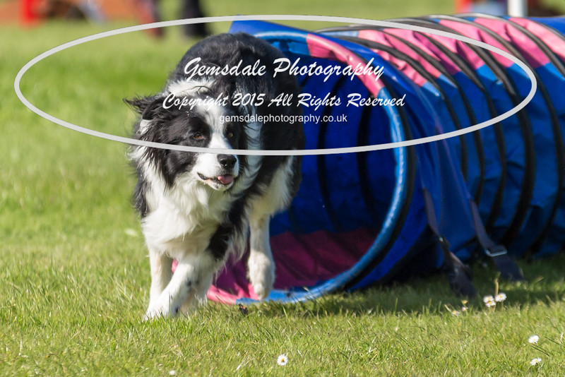 KC Southdowns Agility September 2015 -9030