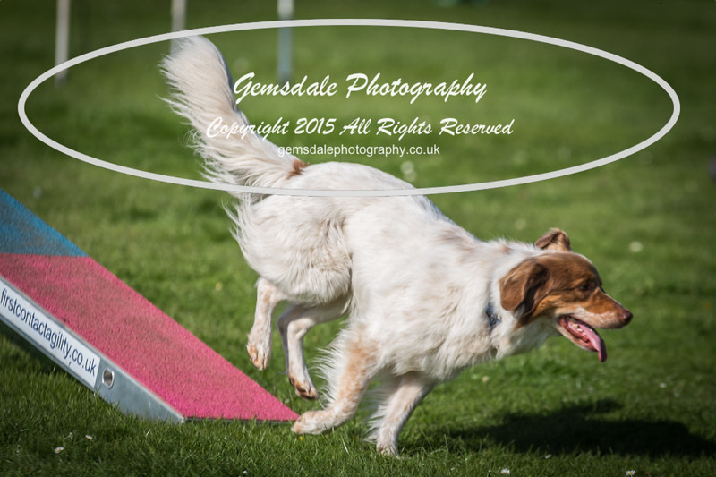 KC Southdowns Agility September 2015 -9034