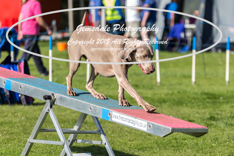 KC Southdowns Agility September 2015 -9012