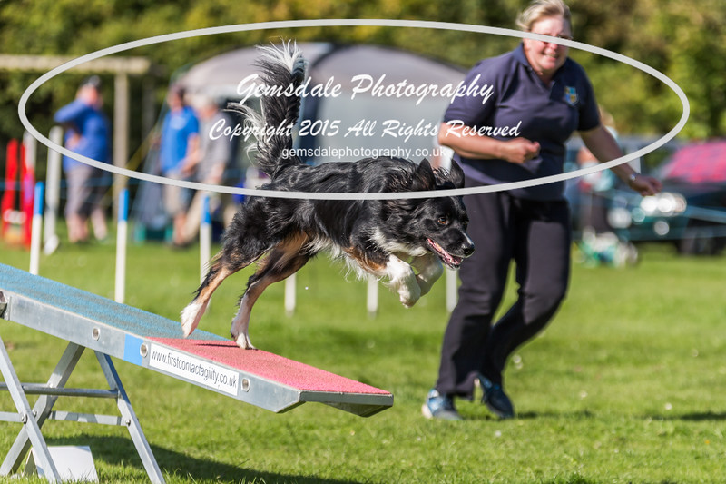 KC Southdowns Agility September 2015 -9025