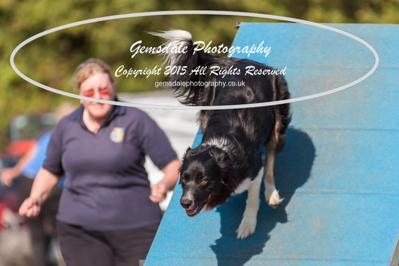 KC Southdowns Agility September 2015 -9020