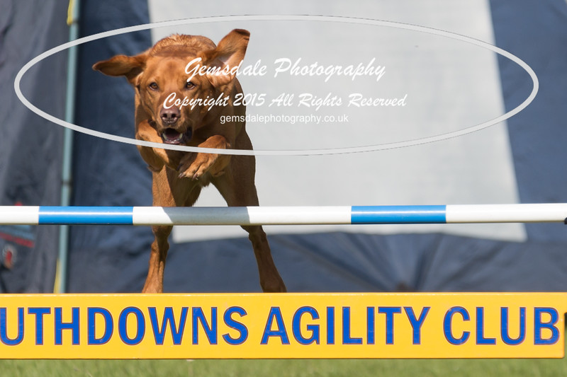 KC Southdowns Agility September 2015 -9014