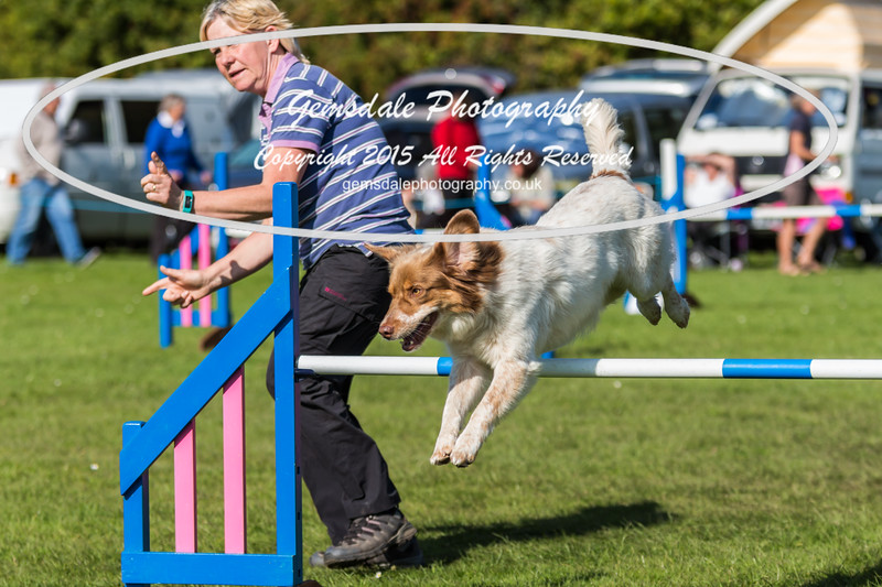 KC Southdowns Agility September 2015 -9033